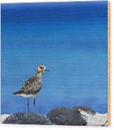 Bird In Blue Wood Print
