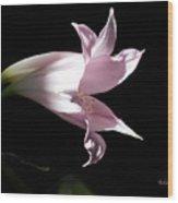 Lovely Lilies Bird In Flight Wood Print