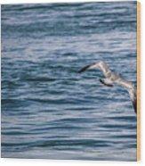 Bird In Flight Over Water Wood Print