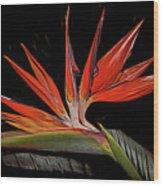 Bird In Flight Vivid Colors Wood Print