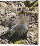 Bird In Hiding Wood Print