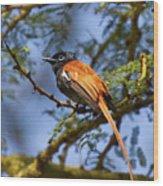 Bird In High Ground Wood Print