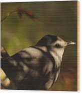 Bird In Tree With Young Leaf Wood Print
