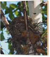Bird Nest In Birch Tree Wood Print