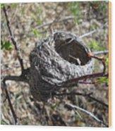 Bird Nest In Wild Rose Bush Wood Print
