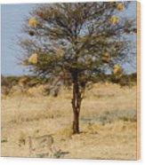 Bird Nests And A Cheetah Wood Print