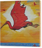 Bird Of Beauty, Loves Light In Flight Wood Print