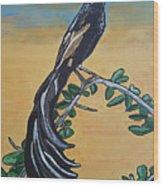 Bird Of Beauty, Ngiculela Wood Print