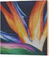 Bird Of Paradise 1 Wood Print