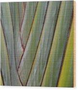 Bird Of Paradise 2 Wood Print