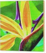 Bird Of Paradise #262 Wood Print