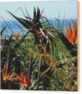Bird Of Paradise By The Sea Wood Print