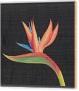 Bird Of Paradise Collection Wood Print