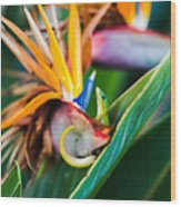 Bird Of Paradise Gecko Wood Print