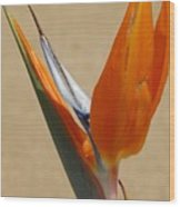Bird Of Paradise II Wood Print