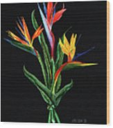 Bird Of Paradise In Black Wood Print