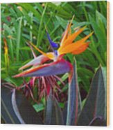 Bird Of Paradise Kalon Wood Print