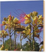 Bird Of Paradise Shrub Wood Print