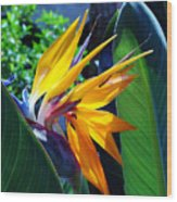 Bird Of Paradise Wood Print by Susanne Van Hulst