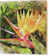 Bird Of Paradise Wc Wood Print