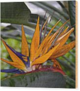 Bird Of Paradise Work Number Three Wood Print