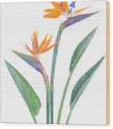 Bird Of Paradize Flowers Wood Print