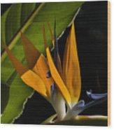 Bird Of Paridise2 Wood Print