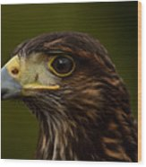 Bird Of Prey Wood Print