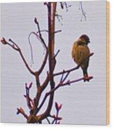 Bird On A Bud Wood Print