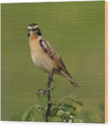 Bird On A Bush  Wood Print