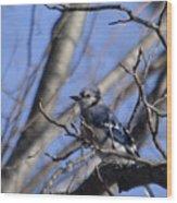 Bird On A Limb Wood Print