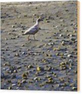 Bird On Beach Wood Print