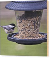 Bird On Feeder Wood Print
