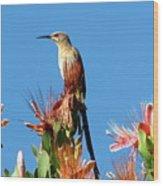 Bird On Protea Wood Print