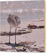 Bird On The Beach Wood Print