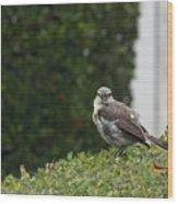 Bird On The Hedges Wood Print