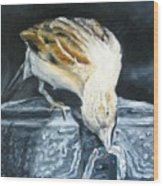 Bird Original Oil Painting Wood Print