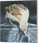 Bird Original Oil Painting Wood Print