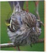 Bird Perch Wood Print