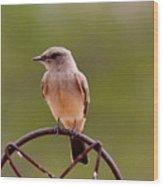 Bird Solitude Hbn1 Wood Print