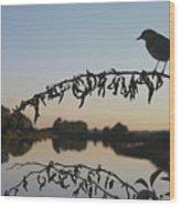 Bird Song At Last Light Wood Print by Dave Gordon