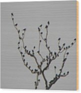 Bird Stop Wood Print