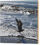 Bird Taking Flight On The Shore Wood Print