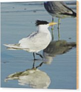 Bird - Tern - Reflection Wood Print