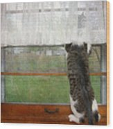 Bird Watching Kitty Cat Wood Print