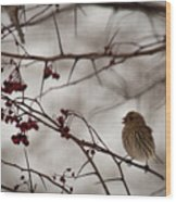 Bird With Berry Wood Print