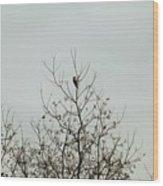 Bird005 Wood Print