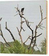 Bird011 Wood Print