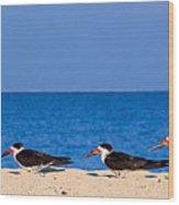 Birdline Wood Print by Gary Dean Mercer Clark