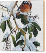 Birds 05 Varied Thrush On Arbutus Robert Bateman Sqs Robert Bateman Wood Print